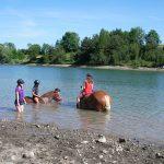 baignade chevaux