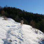 Corréo dans la neige