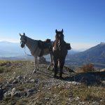 les alpes à cheval