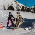 Slalom ski joëring